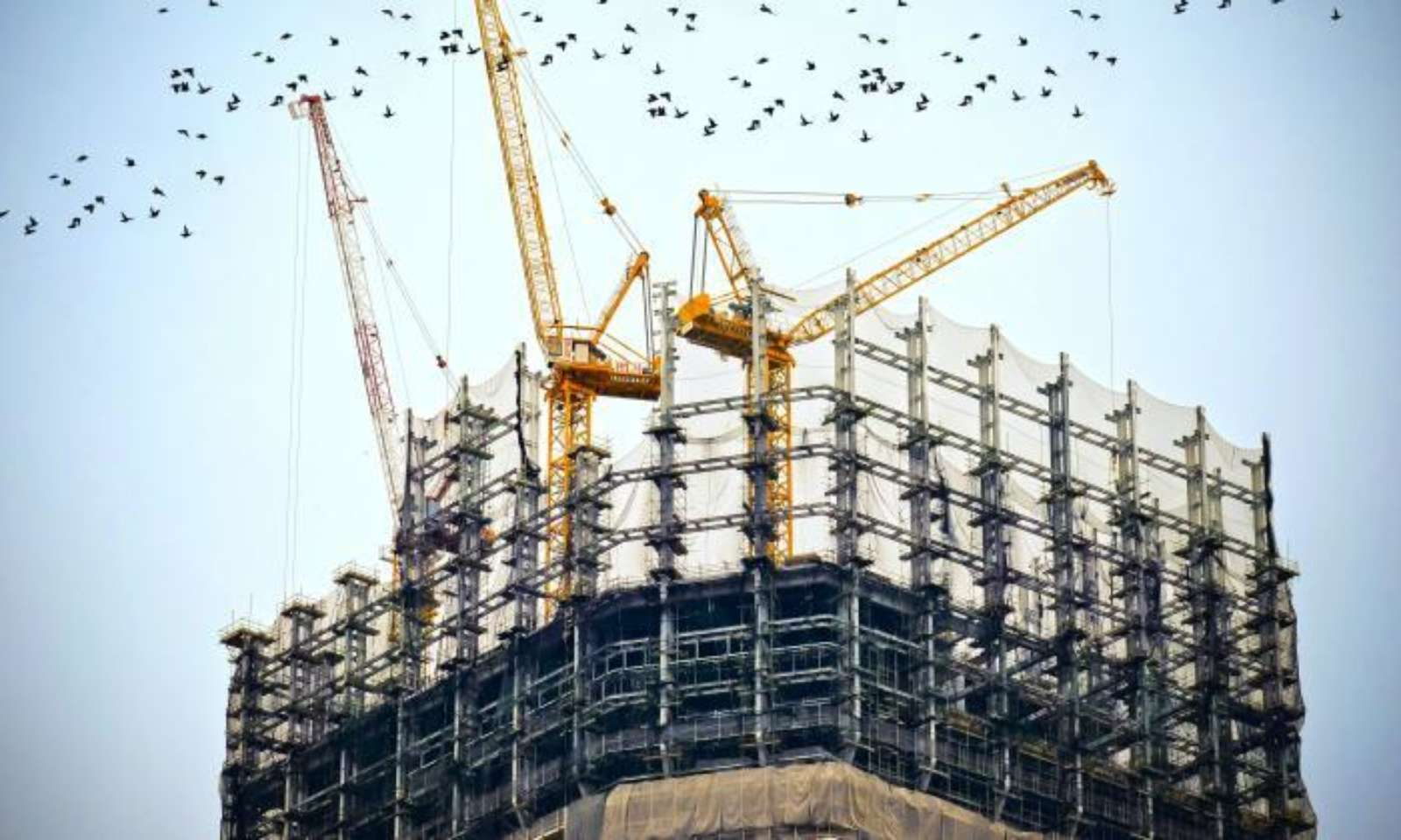 Cranes on the top of a high rise being built with flock of birds flying by