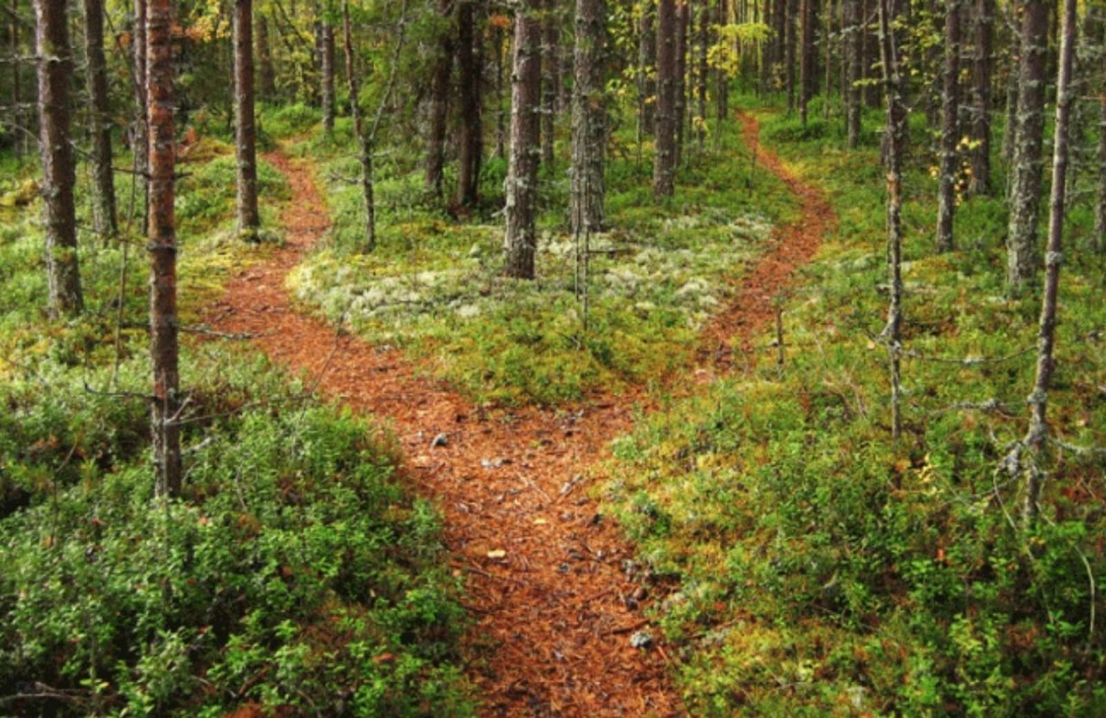 A walking path diverging in the woods